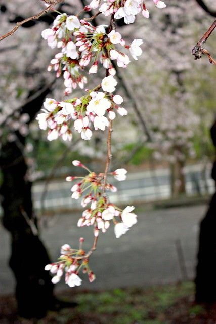 April plantings in Central Parki 065