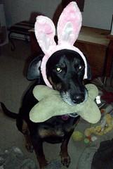 Lola_bunny_411e