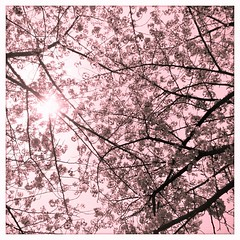 Sun and Pink
