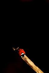 coccinelle sous l'eau ('^_^ Damail Nobre ^_^') Tags: france art love canon word french fun photography photo reflex europe photographie picture 7d franais francais photographe dfn damail francais wwwdamailfr