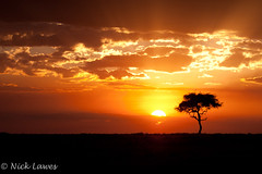 The first sunset (nick.lawes) Tags: africa sunset tree kenya masaimara ef100400mmf4556lisusm canoneos1dsmarkiii