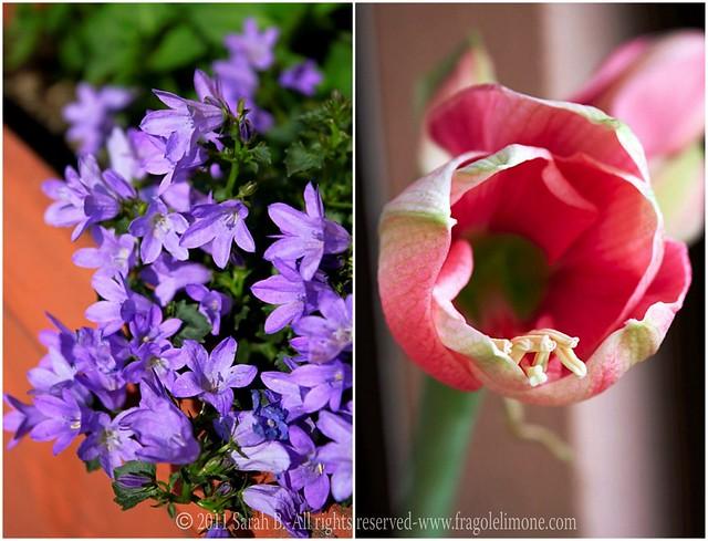 Collage fiori 2edited