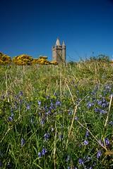 Getting the Blues (Nagraman) Tags: ireland tower bluebells sony down northernireland northofireland folly ulster countydown newtownards scrabo strangfordlough ards codown sonyalpha sonyalpha700