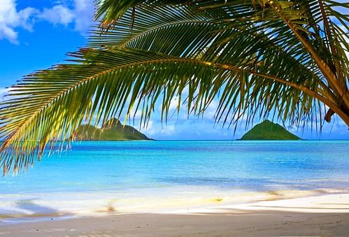 Getting into the Aloha Spirit