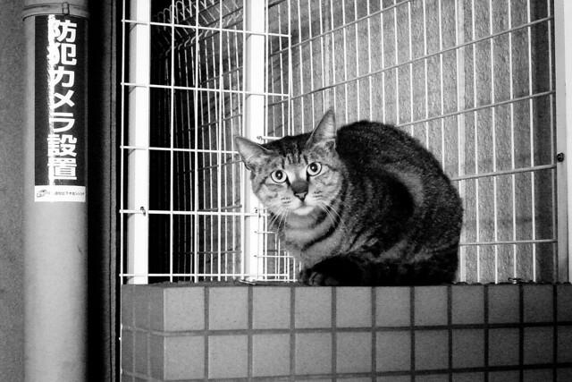Today's Cat@2011-04-30