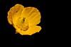 fleur jaune ('^_^ Damail Nobre ^_^') Tags: france art love canon word french fun photography photo reflex europe photographie picture 7d français francais photographe dfn damail wwwdamailfr