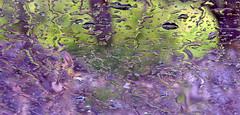 Purple Rain (CK63) Tags: abstract color green window glass rain closeup canon pattern dof purple pov misc canoneos20d minimal raindrops waterdrops windscreen abstracto colourphotography