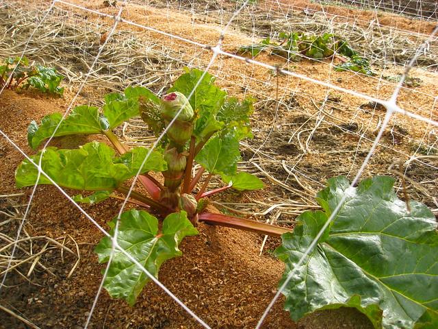 Rhubarb + Flower 02