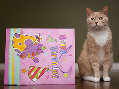 121/365: Jake's 10th Birthday! (pong0814) Tags: birthday portrait cats pets canada cute animals canon photography eos prime feline winnipeg flash may manitoba indoors gift present animalplanet 2011 50d project365 ef35mmf14l 430exii mostly365 theanimalblog