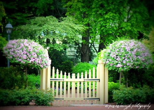 Spring Garden Gate by DiPics