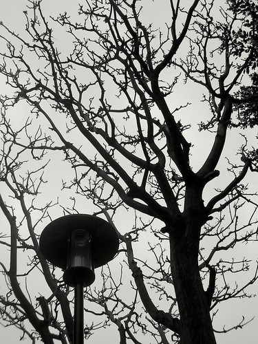 Trees and Lamp