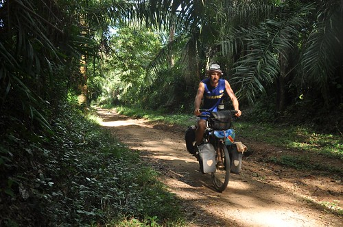 Jungle cycling