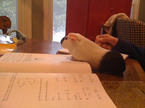 Phyllis likes math