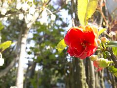 庭の花 赤