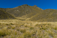 L1007260 (Maharepa) Tags: leica newzealand grass landscape nz southisland otago gras landschaft somewhere tussock aotearoa grasslands neuseeland m9 lindispass sdinsel irgendwo tussockgrass