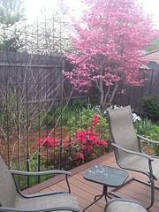 Quick Patio Screen - Garden Maintenance