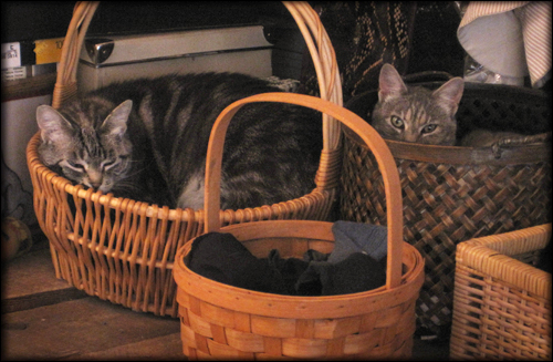 kittens in a baskets