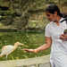 Didn't know herons could be hand-fed!
