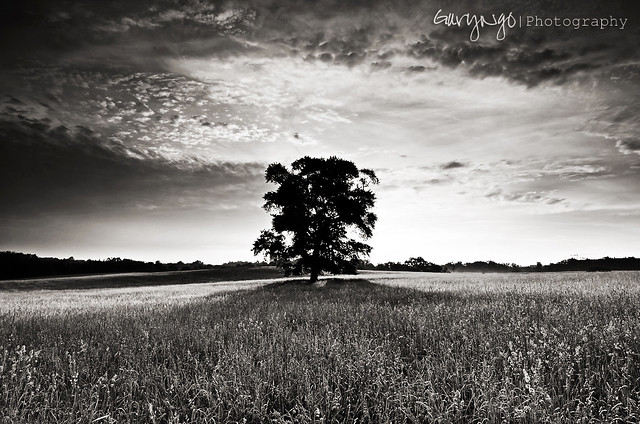 B&W Lone Tree [Explore #13]