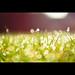 Grass & Dew by PMMPhoto