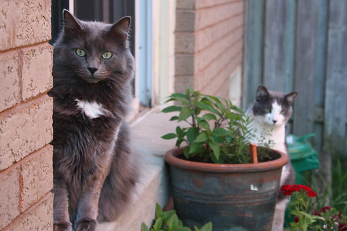 Cats in the Garden