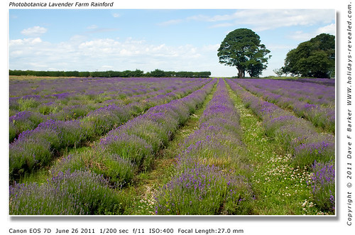 Photobotanica Lavender Farm Rainford