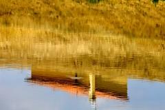 "_MG_5280 - "" The Golden River "" (mauropaolocascasi) Tags: light water reflections river gold landscapes estate fiume case campagna toscana acqua riflessi paesaggi reflejos stagioni oro vibrazioni abigfave reflectionslovers mygearandme sanmauroasigna"