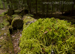 "Mossy Goodness • <a style=""font-size:0.8em;"" href=""http://www.flickr.com/photos/63501323@N07/5883200967/"" target=""_blank"">View on Flickr</a>"