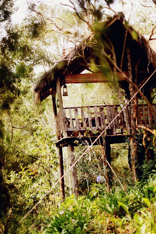 Jungle 19