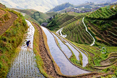 rice worker (marin.tomic) Tags: china travel mountain green water asian nikon asia view rice guilin hill chinese explore worker ricepaddy guangxi riceterrace longsheng d40 guling