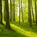 Ich liebe diese Wälder
