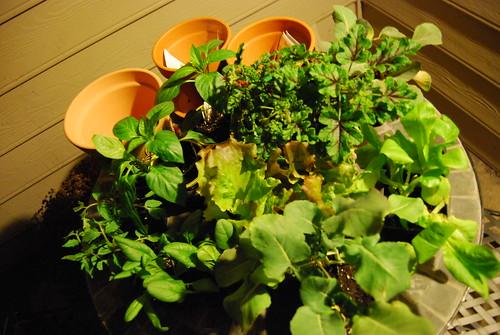 Container Garden Plants