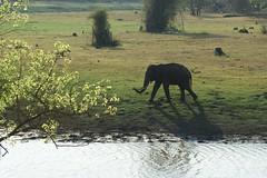 wild male elephant (LaylaLee) Tags: park india national gandhi karnataka rajiv