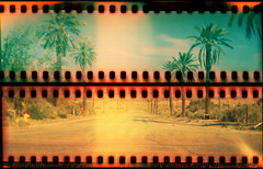 North Shore (QsySue) Tags: road yellow mediumformat desert palmtrees northshore saltonsea boxcamera fujisuperia800 sprocketholes colorfilm northshoreyachtclub redscale reallywide respooled35mmfilm 116camera kodakno2abrownie116camera