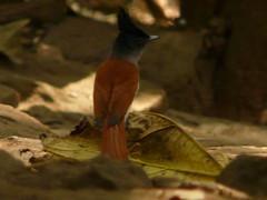 P1150686 (babsybou) Tags: travel india birds silent watching kerala du valley yatra sud inde attapadi birdswatching babsybou malleeshwaramjunglelodge pettickal
