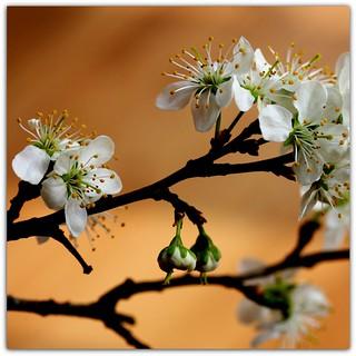 ~~~ A Sprig of Springtime ~~~