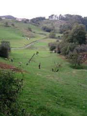 P171010_17.51_[01] (naialaka) Tags: natura basoa belarra baserria berdea paisajea