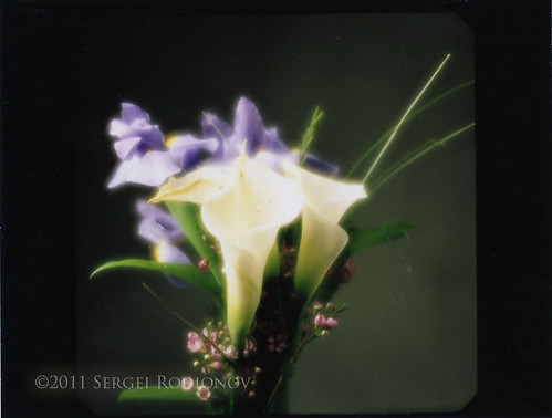 Instant film project: soft lens and flowers