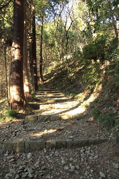 今熊神社の参道の杉の巨木