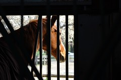 Stable (htakahashi13) Tags: horse yokohama stable d7000