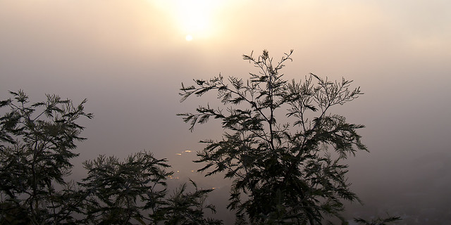 MorningFog_2011_1