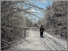 DeLights of Winter (Walter A. Aue) Tags: schnee trees winter snow canada novascotia hiver trail invierno pfad cdn stmargaretsbay walteraaue digitalphotographsfrom2005
