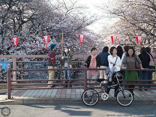 Hanami in Japan, 2011: People enjoying the blossoms in Naka-meguro