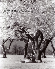 Stolen Moment (CondorsPhotos) Tags: people bw flower love dc washington spring blossoms romance infrared