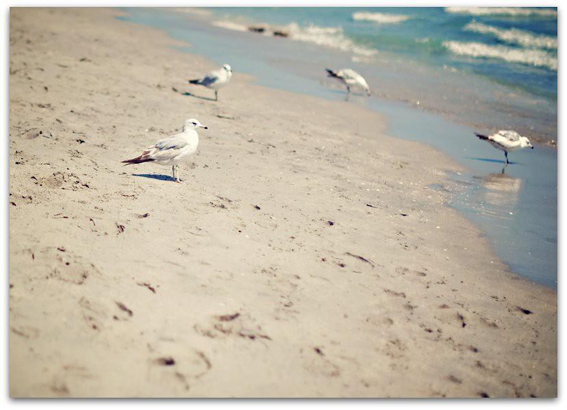 Florida beach 3