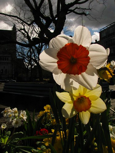 Spring in Belfast