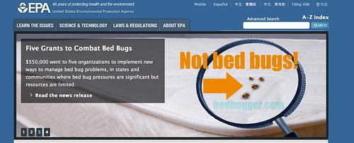 EPA not bedbugs