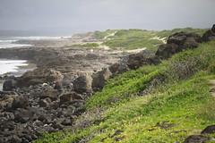 _MG_2661 (Anna Kipervaser) Tags: ocean beauty island hawaii peace oahu tranquility snorkeling pele monkseal