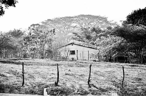 En el ejido Cuauhtémoc (19)
