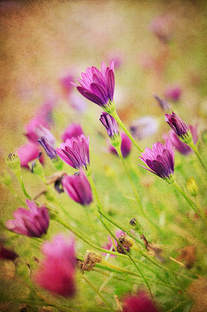purple flowers with texture